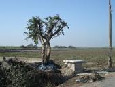 我家土地公廟:DSC01338.JPG