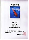 御三家錦鯉(來自福爾摩莎及台灣錦鯉網的超級錦鯉相片):cert-9.jpg