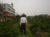 真柏:DSCN0880.JPG