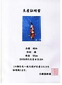 御三家錦鯉(來自福爾摩莎及台灣錦鯉網的超級錦鯉相片):cert-12.jpg