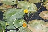 980826-2福山植物園:IMG_5447.JPG