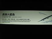 990525-2高雄墾丁畢旅~~海生館:IMG_2687.JPG