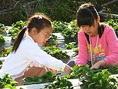 980209大湖草莓文化館&採草莓:IMG_7543.JPG
