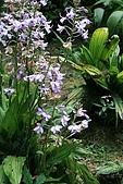 980826-2福山植物園:IMG_5456.JPG
