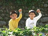 980209大湖草莓文化館&採草莓:IMG_7547.JPG