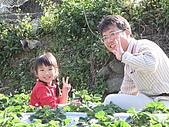 980209大湖草莓文化館&採草莓:IMG_7552.JPG