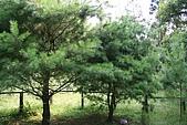 980826-2福山植物園:IMG_5499.JPG