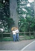 910828觀霧國家森林遊樂區:觀霧14.jpg