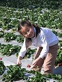 980209大湖草莓文化館&採草莓:IMG_7560.JPG