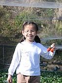 980209大湖草莓文化館&採草莓:IMG_7566.JPG