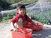 980209大湖草莓文化館&採草莓:IMG_7568.JPG