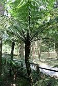 980826-2福山植物園:IMG_5475.JPG