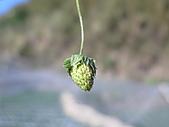 980209大湖草莓文化館&採草莓:IMG_7572.JPG