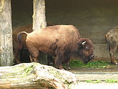 980321艾貝兒親子同遊~木柵動物園看大貓熊:IMG_7777.JPG