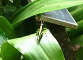 980826-2福山植物園:IMG_0809-1.JPG