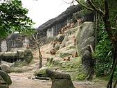 980321艾貝兒親子同遊~木柵動物園看大貓熊:IMG_7781.JPG