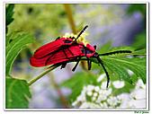 昆蟲01:昆蟲0119.jpg