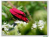昆蟲01:昆蟲0120.jpg