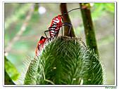 昆蟲01:昆蟲0110.jpg