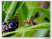昆蟲01:昆蟲0111.jpg