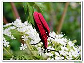 昆蟲01:昆蟲0121.jpg