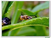 昆蟲01:昆蟲0112.jpg