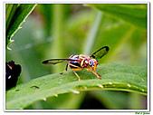 昆蟲01:昆蟲0113.jpg