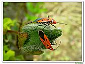 昆蟲01:昆蟲0102.jpg