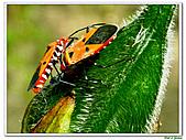 昆蟲01:昆蟲0103.jpg