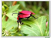 昆蟲01:昆蟲0116.jpg