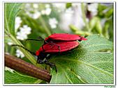 昆蟲01:昆蟲0118.jpg