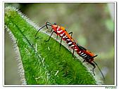 昆蟲01:昆蟲0108.jpg