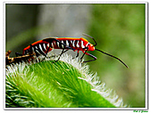 昆蟲01:昆蟲0109.jpg