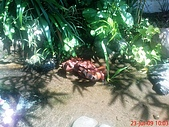 98.07.22~07.23南庄山形玫瑰:DSC00096.JPG