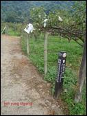 台中市東勢區自由里雙崎部落之埋伏坪步道:P9288450-1.jpg