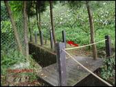 台中市東勢區自由里雙崎部落之埋伏坪步道:P9288452-1.jpg