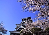 我的相簿:50809洪祐祐Japanese Cherry Blossoms.JPG